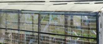 Строительство теплицы из пластиковых бутылок на даче для выращивания растений? Пошагово +Видео
